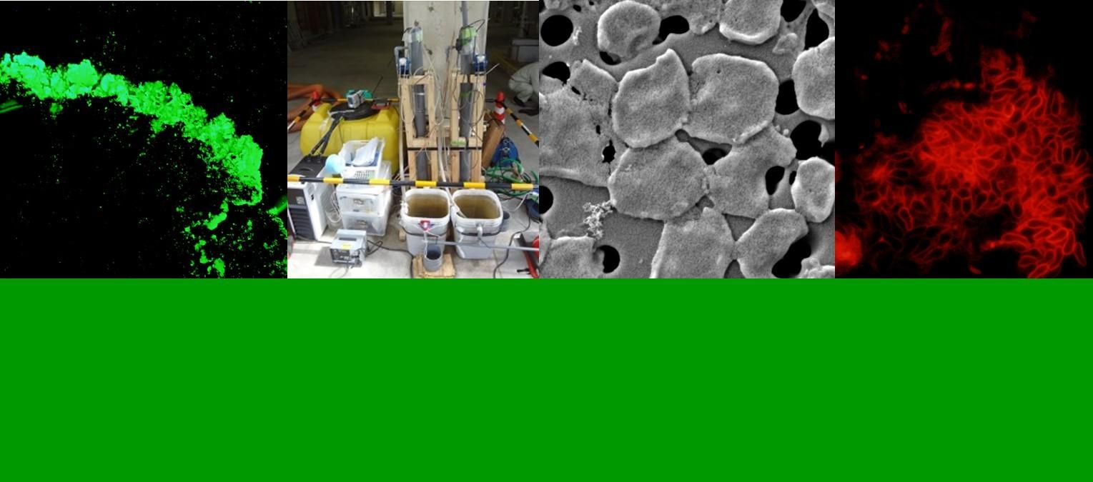 国立大学法人名古屋工業大学 社会工学科 環境都市分野 水環境微生物工学研究室